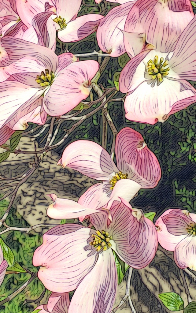 An artfully altered image of pink dogwood blossoms.