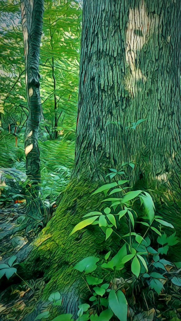 An artfully altered photo of a moss-clad tree in a ferny woodland.