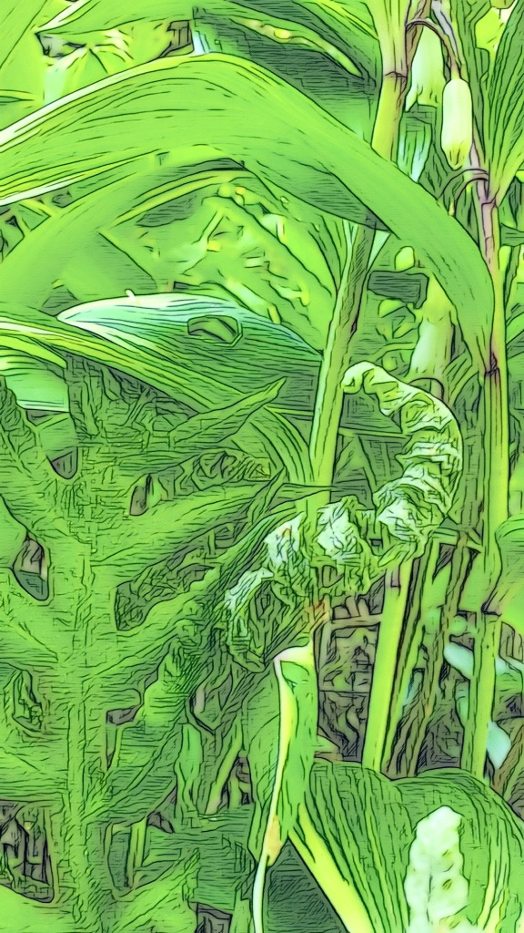 An artfully altered up-close photo of green ferns and Solomon's Seal.
