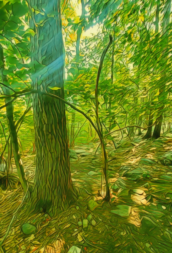 An artfully altered photo of a sun-stroked woodland.