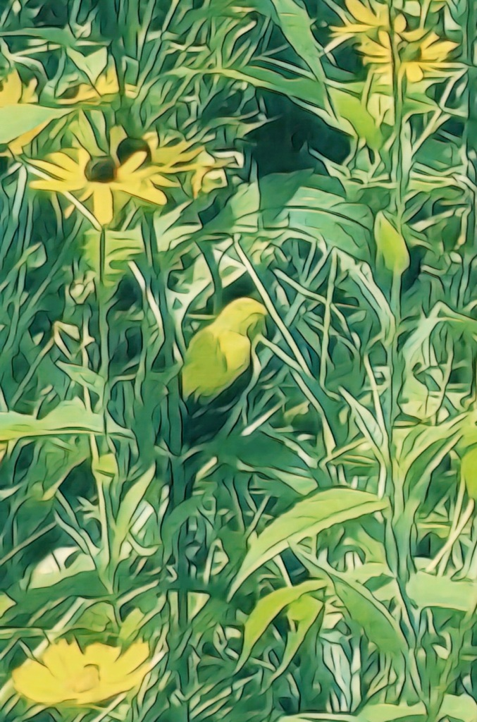 An artfully altered photo of a male American Goldfinch, perched amongst a bed of blooming wildflowers.