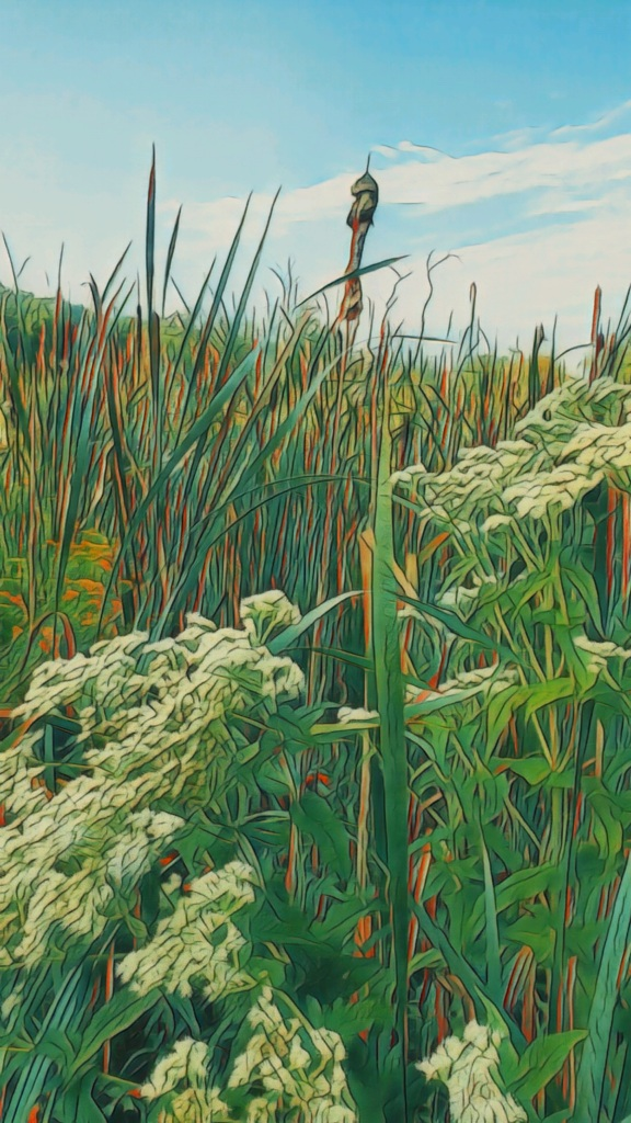 An artfully altered photo of a reed and flower filled meadow, with tower cattails.