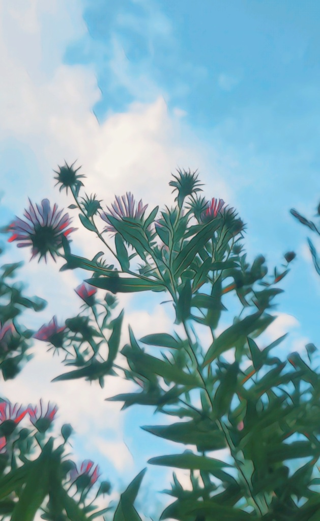 An artfully altered photo looking up through the leafy stems and pink blooms of New England Asters.