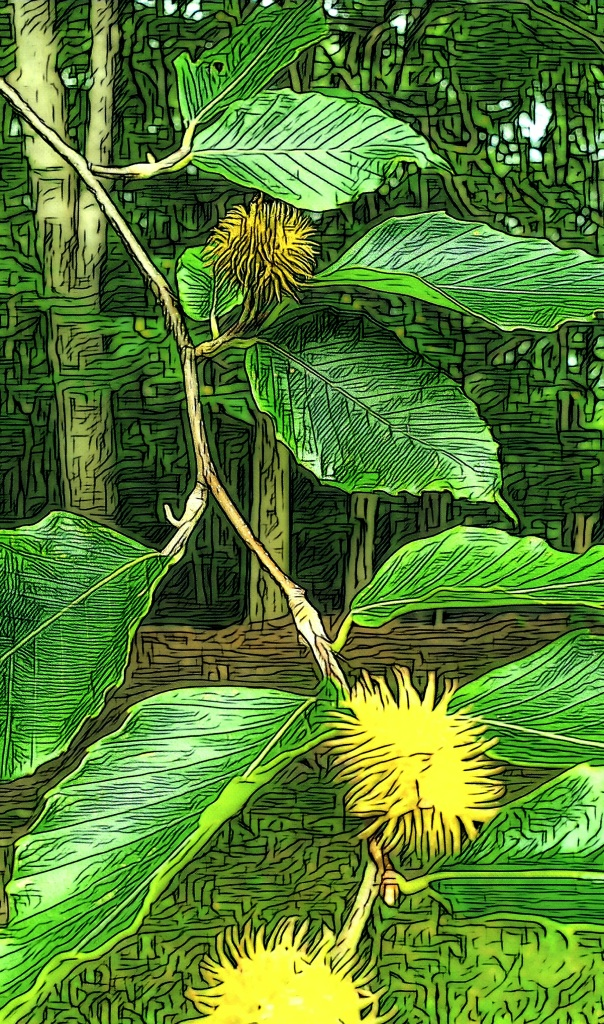 An artfully altered close-up photo of a Beech tree's leaves and seedpods, and a forested background.