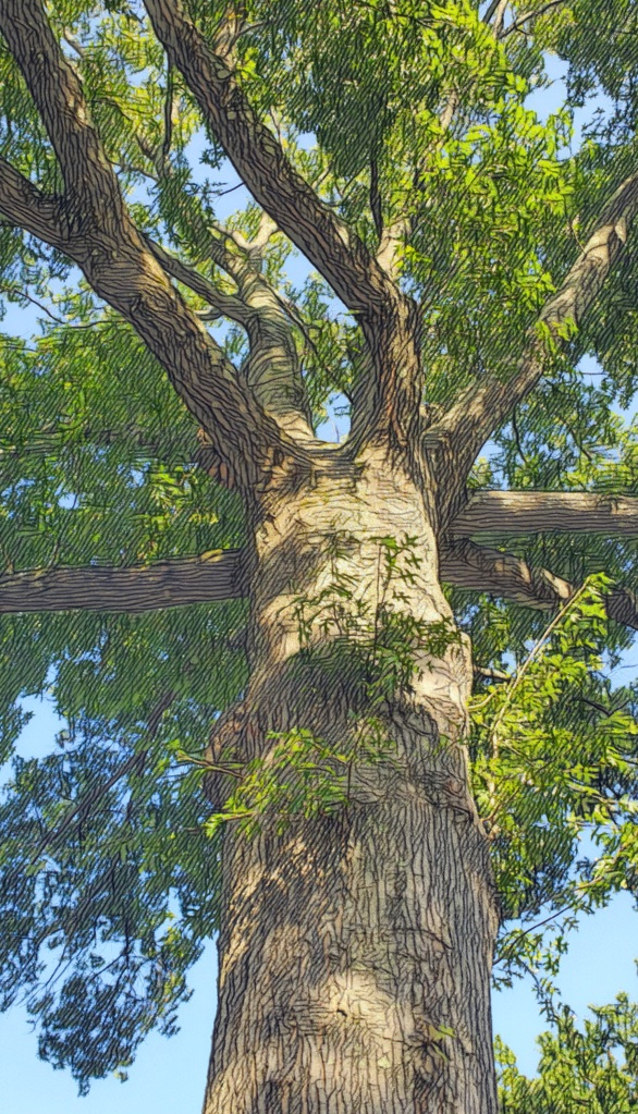 An artfully altered photo looking up the trunk of a great oak tree and through its leafy limbs.