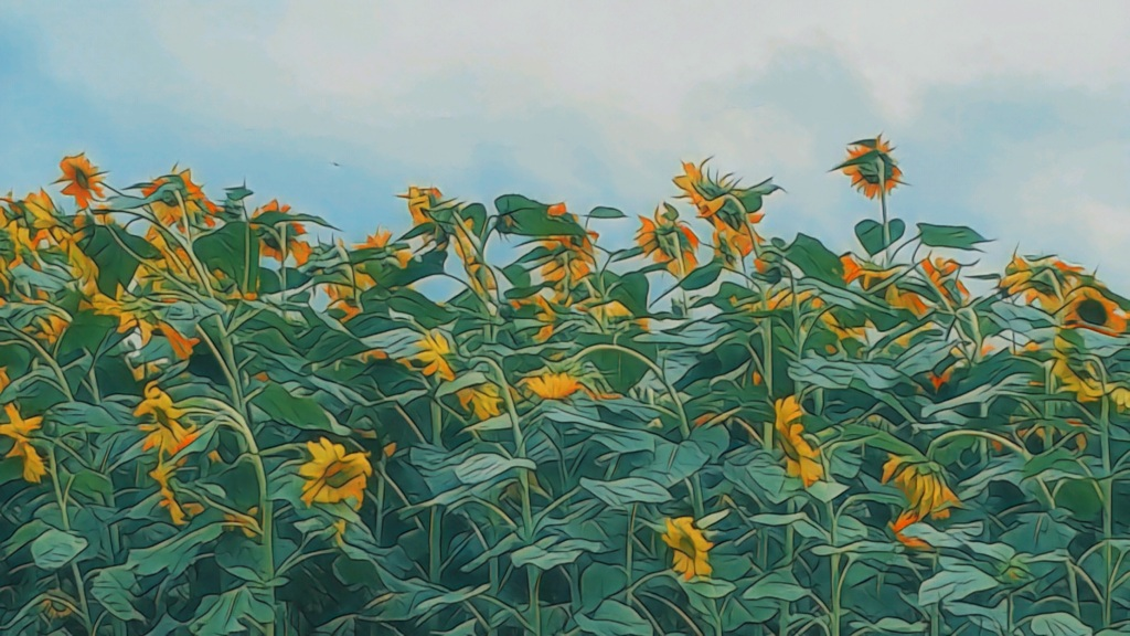 An artfully altered photo of a field of tall sunflowers against a cloudy blue sky.
