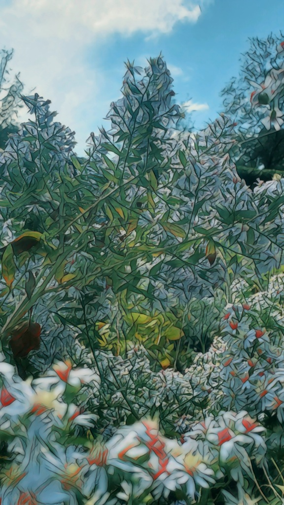 An artfully altered photo looking skyward through a towering screen of bee-filled, pale purple asters.